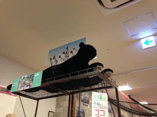 大曲の三井アウトレットにいた黒ヒョウ